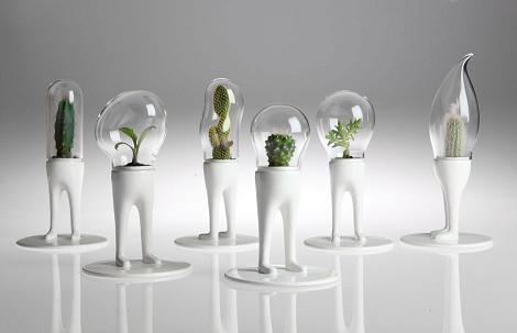 cactus design terrarium