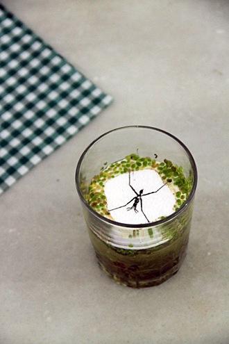 spider-drink