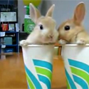 Post thumbnail of 2 Bunnies Twittering