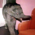 Post Thumbnail of All I want for Christmas is an Elephant Baby