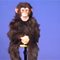 Post Thumbnail of Magical Chimp