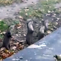 Post Thumbnail of Happy Otters Having a Good Time