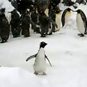 Post Thumbnail of Happiest Penguin Ever–2011 Here We Come