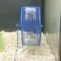 Post thumbnail of Two Hamsters one Wheel