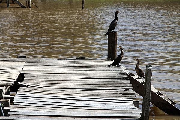 Birdy-Birds