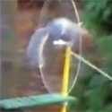 Post Thumbnail of This Squirrel goes Nuts