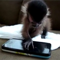 Post thumbnail of Baby Monkey and an Iphone