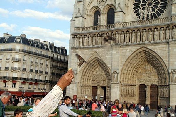 Birding-Paris