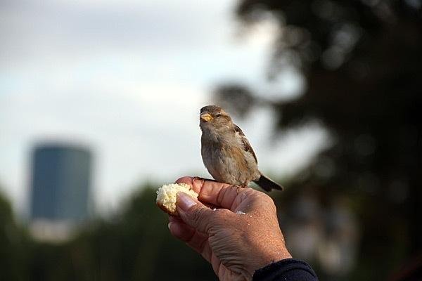 Drunk-Bird