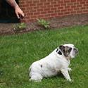 Post Thumbnail of Hunde Lenkdrachen