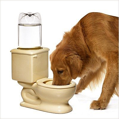 Post thumbnail of Dog Toilet Bowl