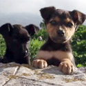 Post Thumbnail of Cute Puppies