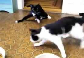 Post image of Miezekatzen auf Drogen