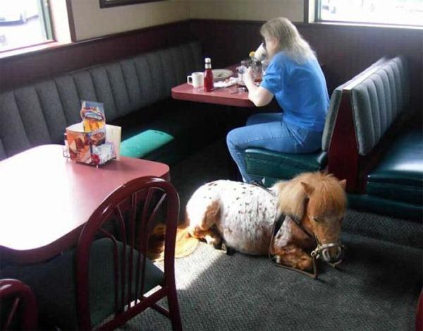 Diner Pony