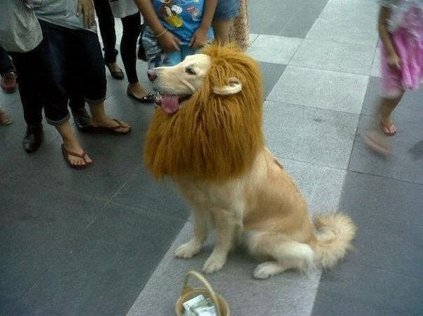 Lion Dog