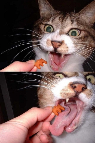 fuky kitten