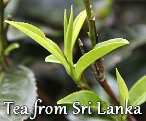 Sri Lanka Tea