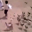 Post thumbnail of Real Chicken Chased By Chicken