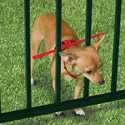 Post Thumbnail of Escape Preventing Dog Collar