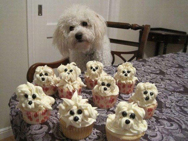 Poodle Cakes