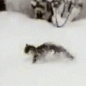 Post thumbnail of Snow Kitty Gif And Other Musings