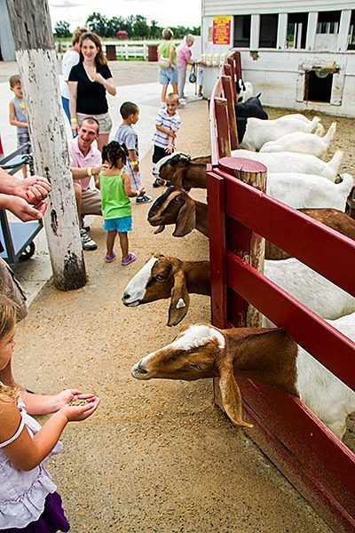 Petting-Zoo-Ohio