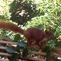 Post Thumbnail of Fail Squirrel