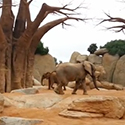 Post Thumbnail of Elephant Doing The Moonwalker