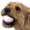 Post Thumbnail of Big Teeth Dog Toy