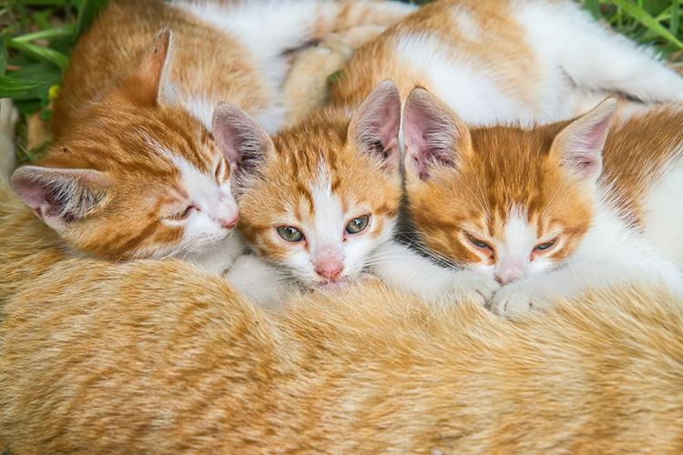 Cute Cats And Kittens Hunter Around The World Random Good Stuff