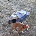 Post thumbnail of Pet Umbrella